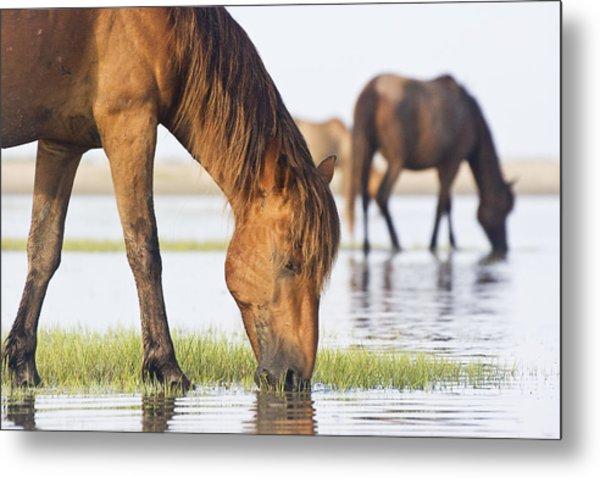 Banker Horses On Tidal Flat Metal Print