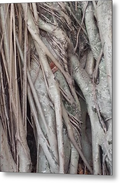 Banyan In Maui Metal Print