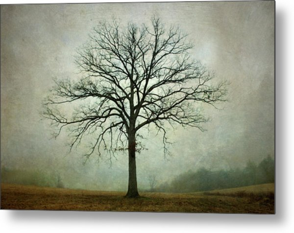Bare Tree And Fog Metal Print