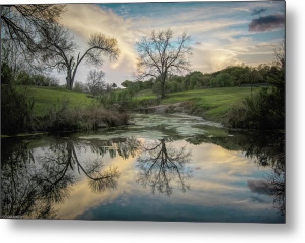 Bare Tree Reflections Metal Print
