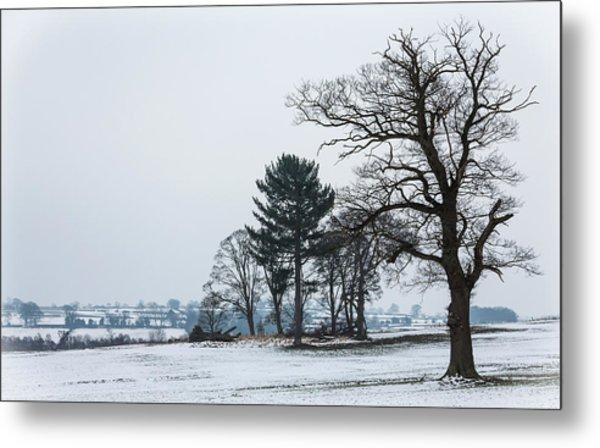 Bare Trees In The Snow Metal Print