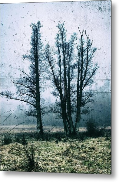 Bare Winter Trees Metal Print