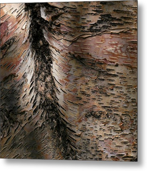 Bark At Woodstream Village Metal Print