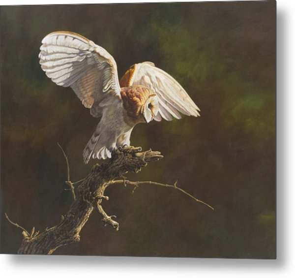 Metal Print featuring the painting Barn Owl by Alan M Hunt