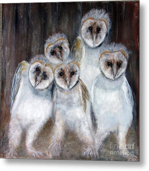 Barn Owl Chicks Metal Print
