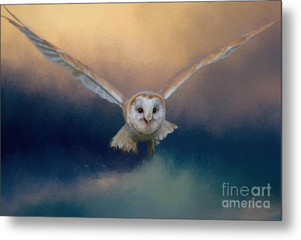 Barn Owl In Flight Metal Print