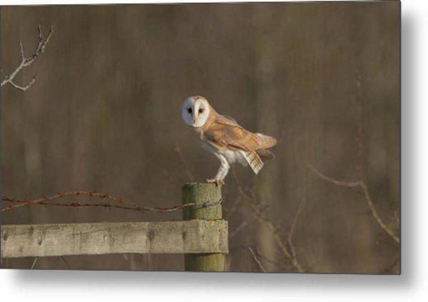 Barn Owl On Fence Metal Print