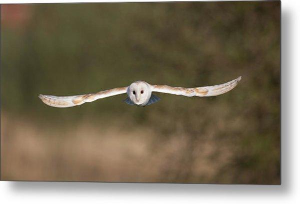 Barn Owl Wingspan Metal Print