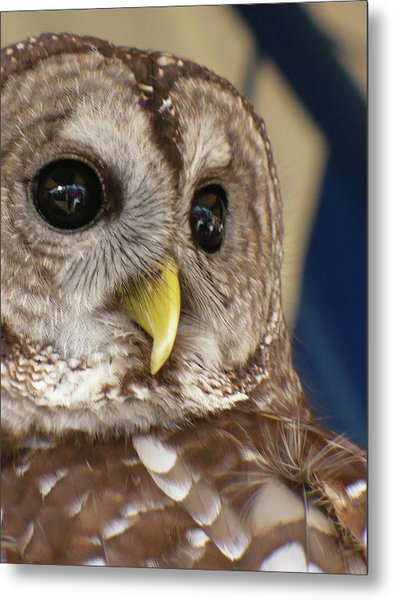 Barney The Owl Metal Print