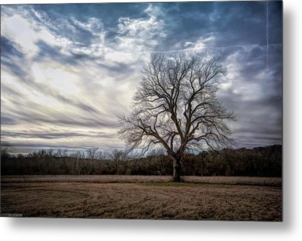 Baron Tree Of Winter Metal Print