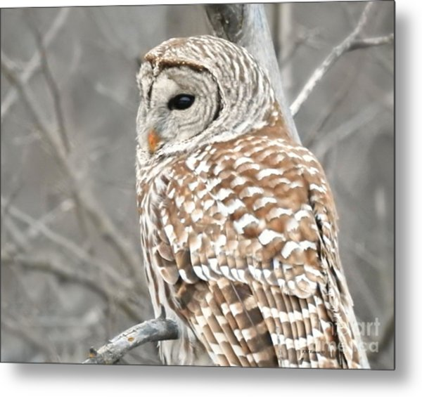 Barred Owl Close-up Metal Print