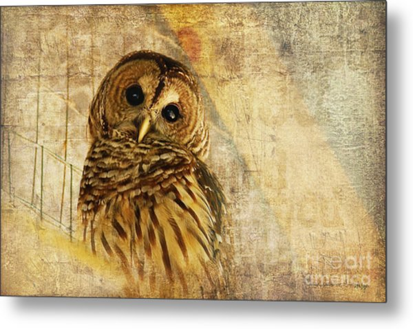 Metal Print featuring the photograph Barred Owl by Lois Bryan