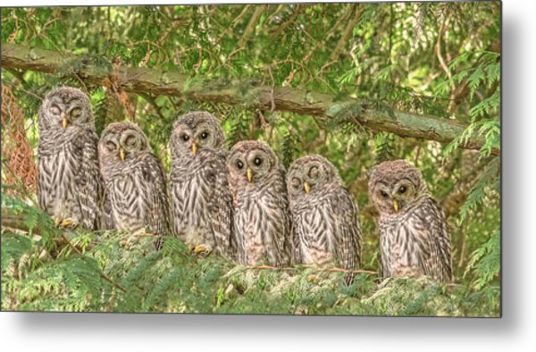 Barred Owlets Nursery Metal Print