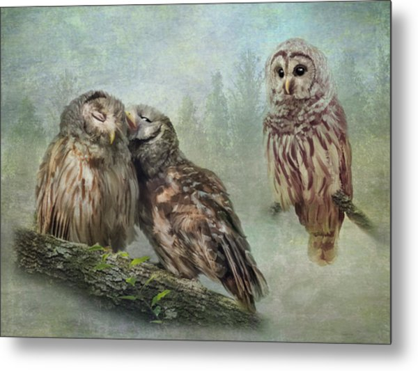 Barred Owls - Steal A Kiss Metal Print