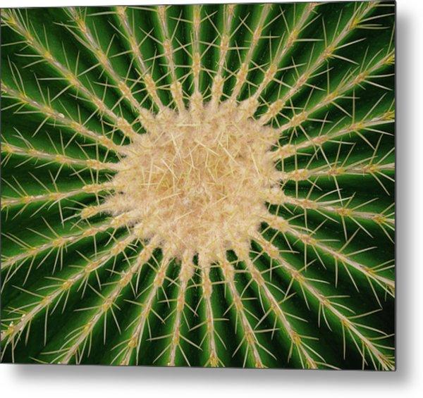 Barrel Cactus No. 6-1 Metal Print