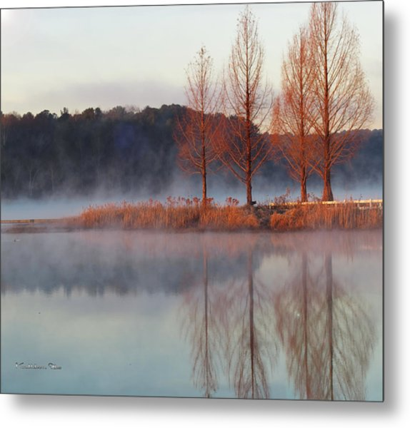 Barren, Beautiful Trees Metal Print