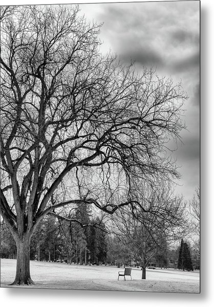 Metal Print featuring the photograph Winter In Cheesman Park, Denver, Co Empty Trees And Empty Benches by Philip Rodgers