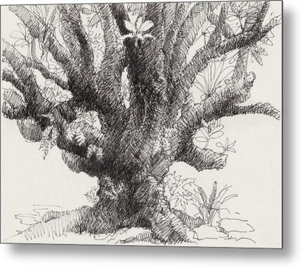 Barringtonia Tree Metal Print