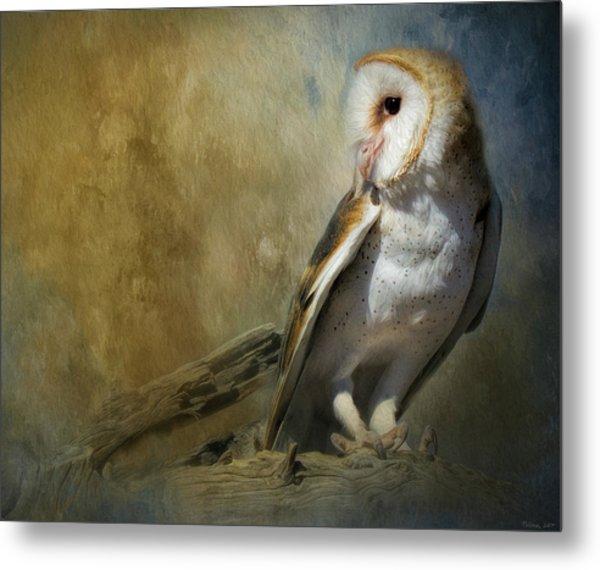 Bashful Barn Owl Metal Print