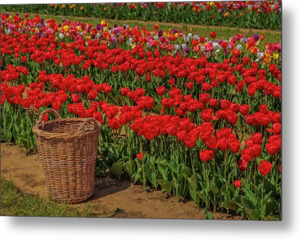 Metal Print featuring the photograph Basket For Tulips by Susan Candelario