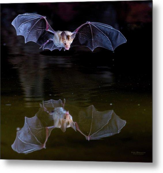 Bat Flying Over Pond Metal Print