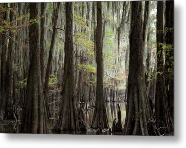 Bayou Trees Metal Print