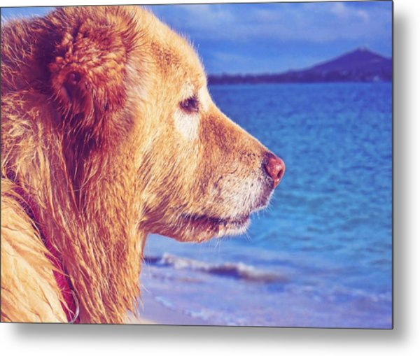 Beach Buddy  Metal Print by JAMART Photography