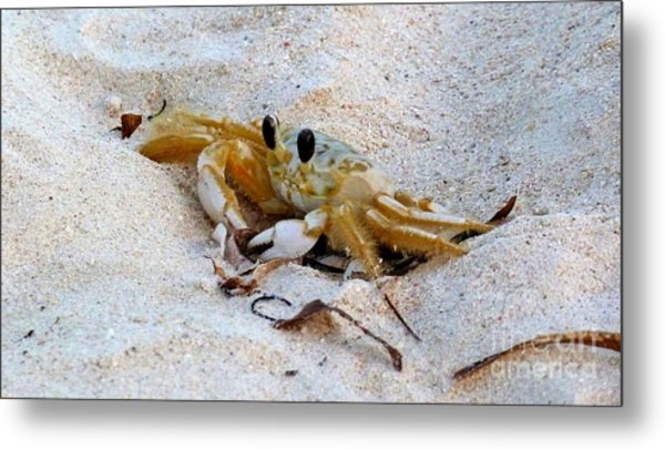Beach Crab Metal Print