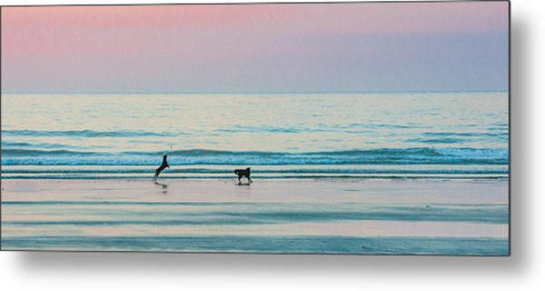 Beach Dogs Playing At Dawn Metal Print