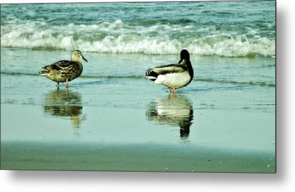 Beach Ducks Metal Print