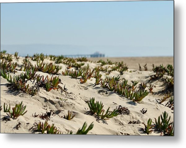Beach Dune Metal Print