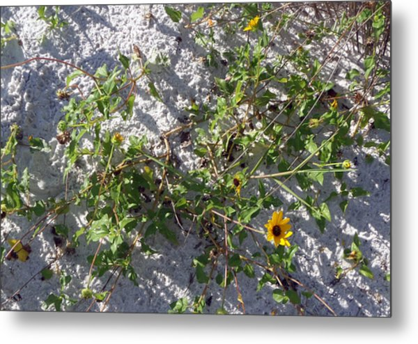 Beach Flora Metal Print by Pepsi Freund