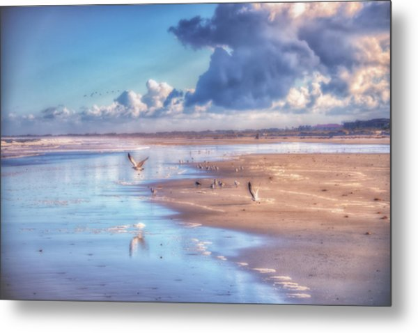 Beach Gulls Metal Print
