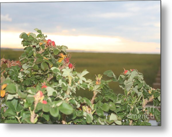 Beach Plums Metal Print by Amy Holmes