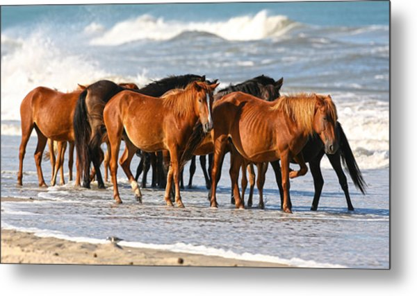 Beach Ponies Metal Print