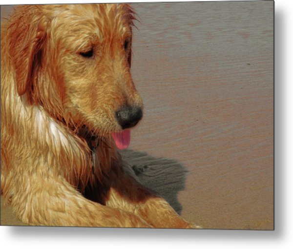 Beach Pup Metal Print by JAMART Photography