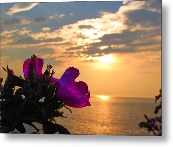 Beach Roses Metal Print
