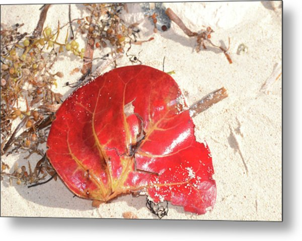 Beach Treasures 1 Metal Print