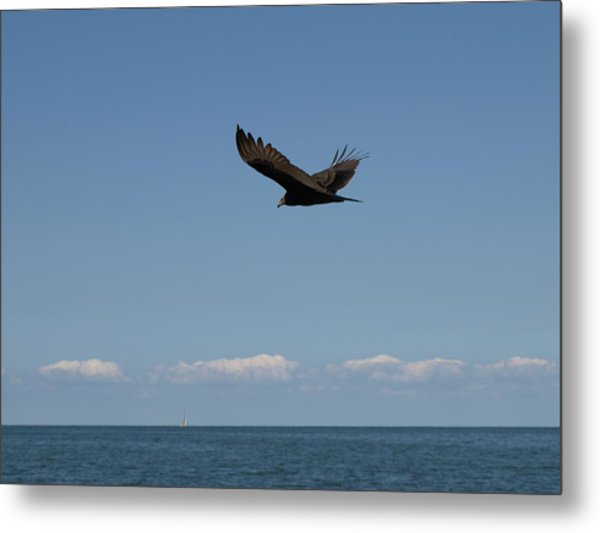 Beach Vulture Metal Print