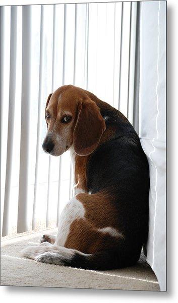 Beagle Attitude Metal Print
