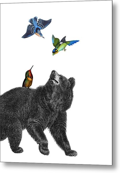 Bear With Birds Antique Illustration Metal Print
