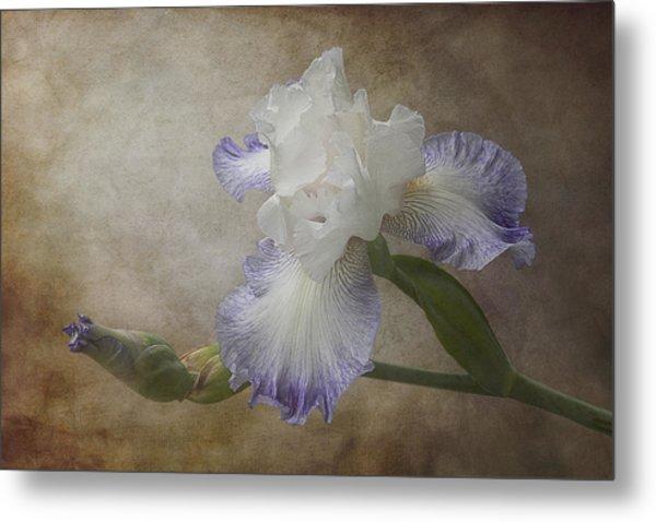 Bearded Iris 'gnuz Spread' Metal Print