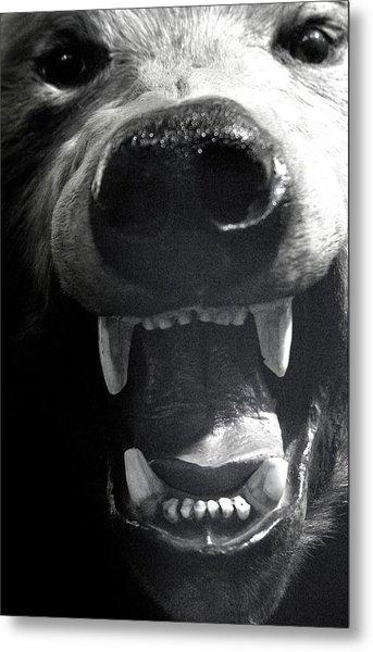 Beared Teeth Metal Print by Jez C Self