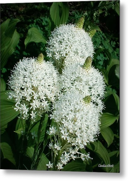 Beargrass  Metal Print