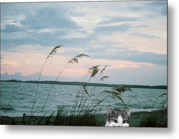 Bearly Beachin Metal Print