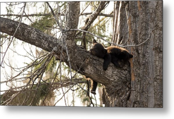 Bearly Hanging In There Metal Print