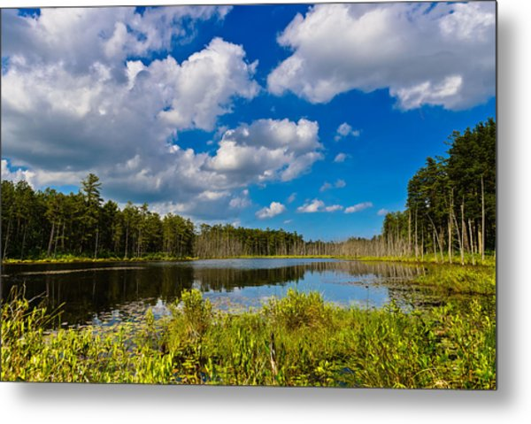 Beautiful Afternoon In The Pine Lands Metal Print