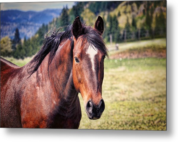Beautiful Bay Horse In Pasture Metal Print