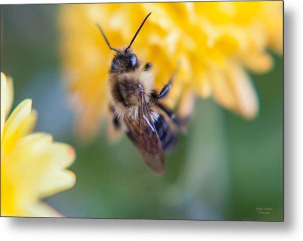 Beautiful Bee Metal Print