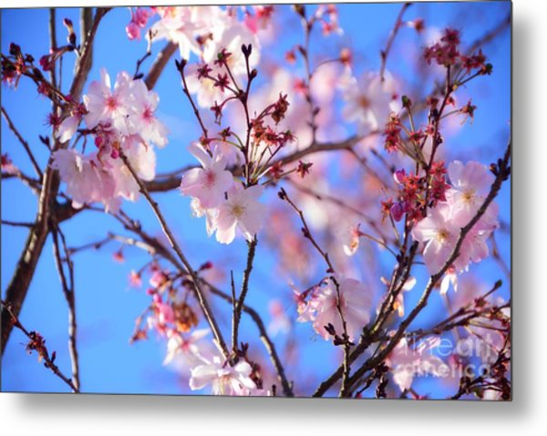 Beautiful Blossoms Blooming  For Spring In Georgia Metal Print